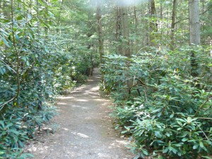 rhododendron-grove
