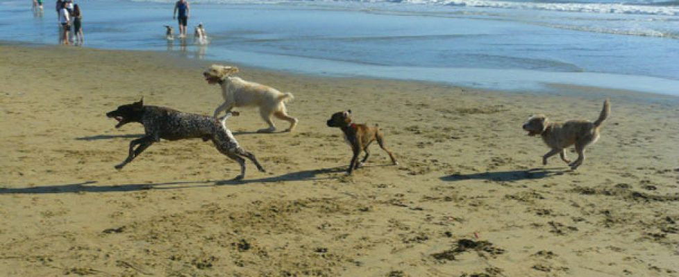 The Dog Beach in Surf City, California