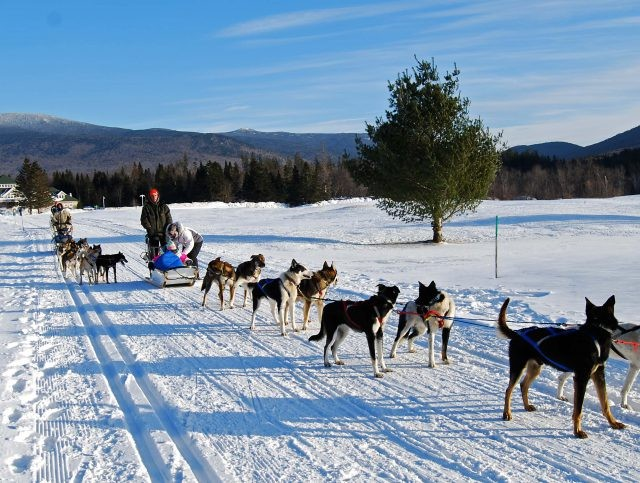 Pic(k) of the Week - Dog Sledding in New Hampshire