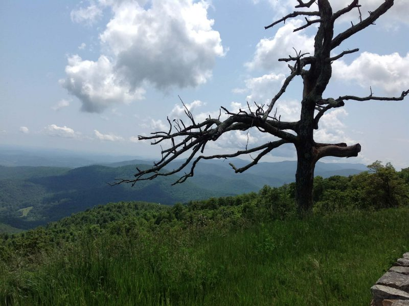 Pic(k) of the Week – Shenandoah National Park