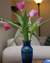 Pic(k) of the Week - Summer in a Blue Vase