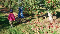 Pic(k) of the Week - Blue Jay Orchard in Bethel, Connecticut