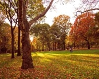 Pic(k) of the Week - Autumn in Central Park, New York