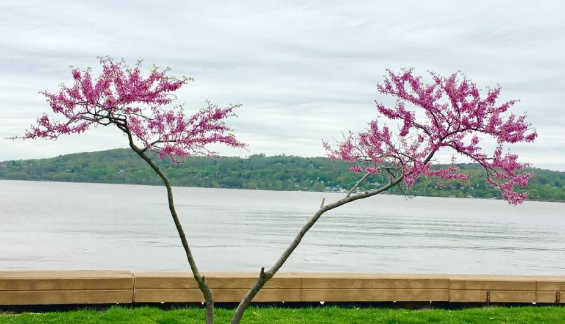 Croton Point Park in New York
