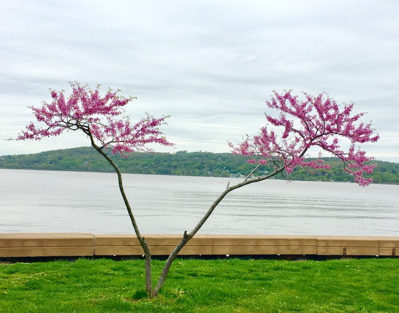 Pic(k) of the Week – Croton Point Park