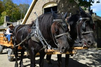 Percheron Horses at Fenimore Farm Museum