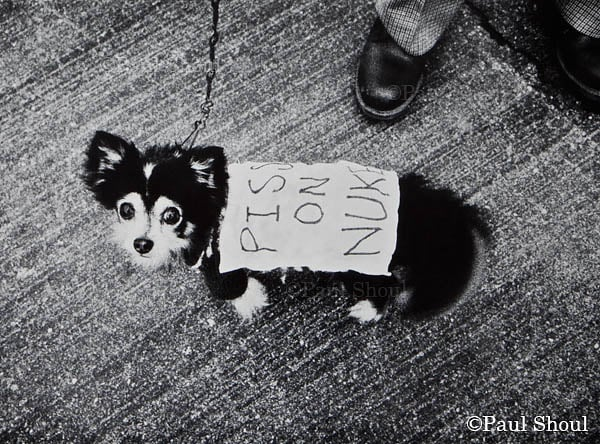 anti nuclear protest dog with sign piss on nukes