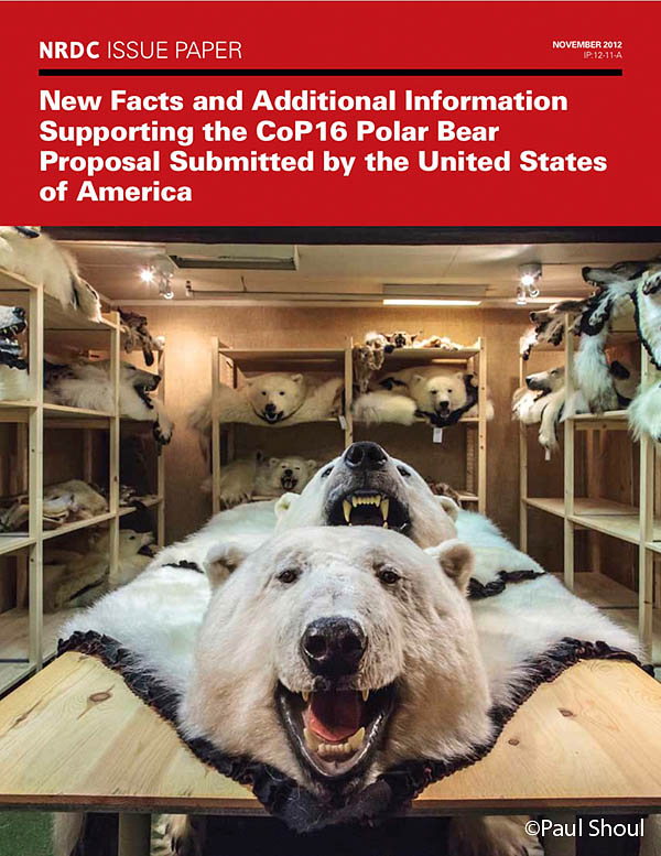 polar bears in Norway on the cover of NRDC issue paper