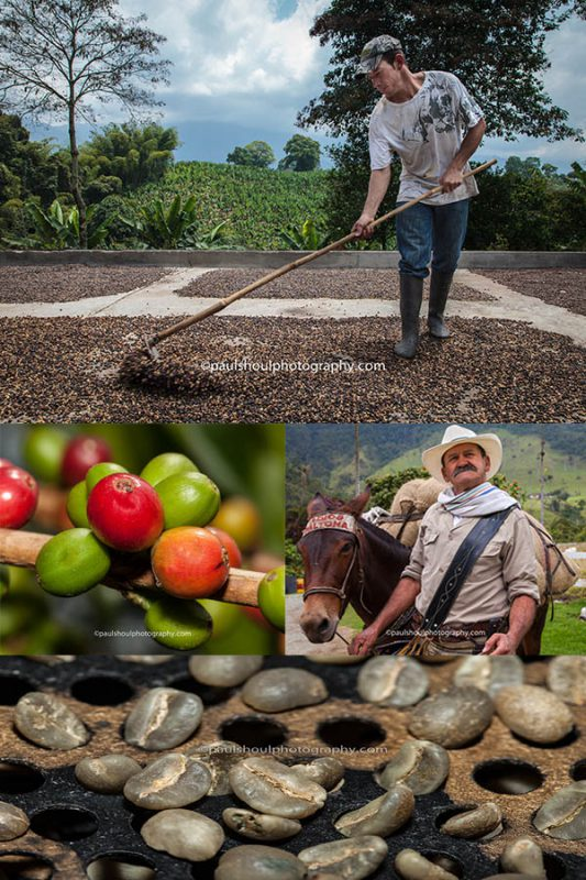 Pereira coffee growing triangle in colombia