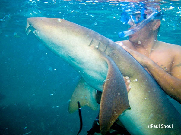 swimming with nurse sharks belize charlie rubio