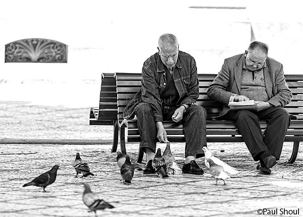coimbra-portugal-old-men-feeding-pigeons-in-the-park