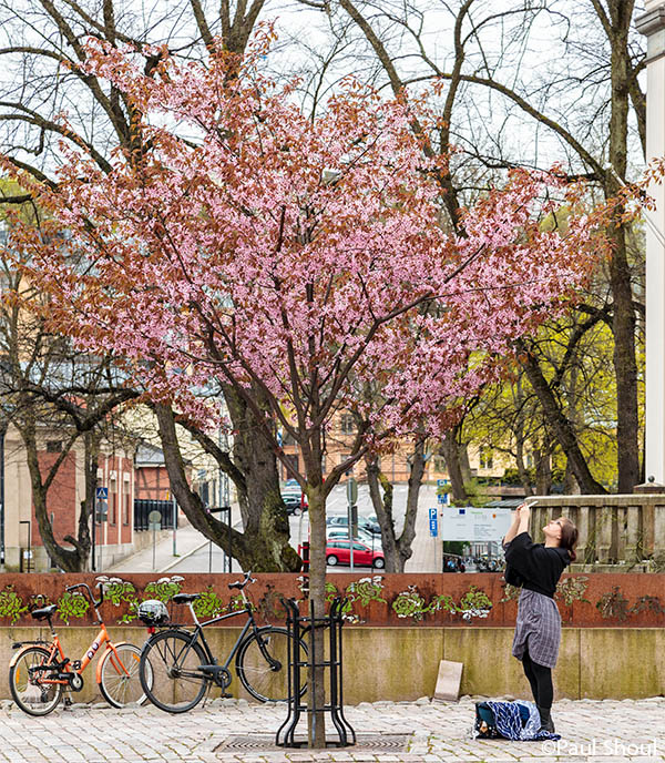 turku finland a woman photographs a tree