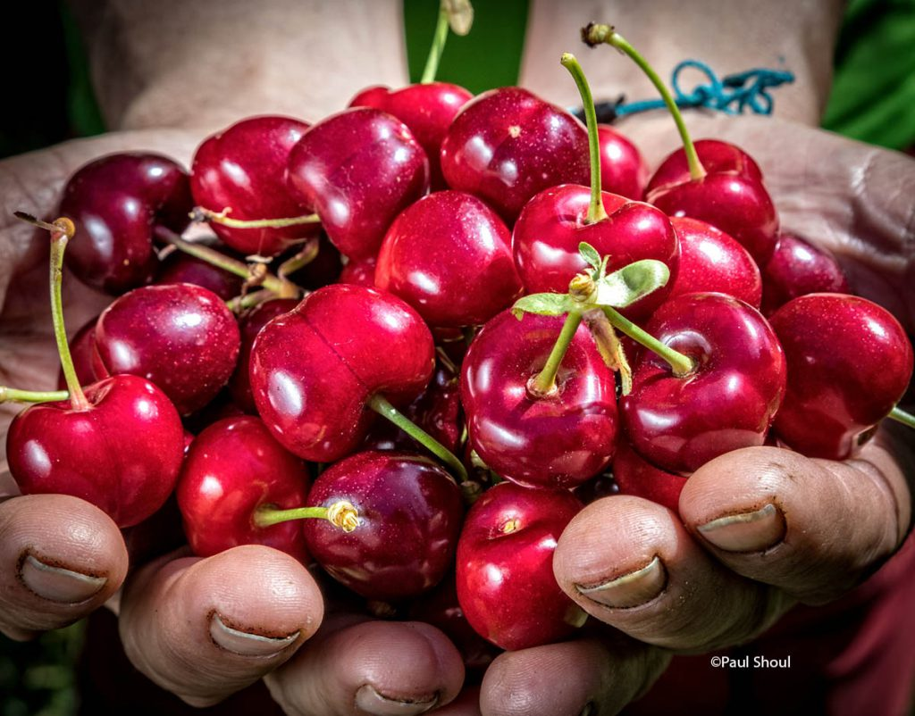cherries-extremadura