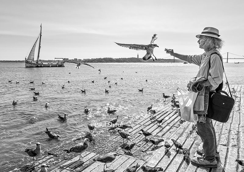 feeding birds, bird man of lisbon, Portugal