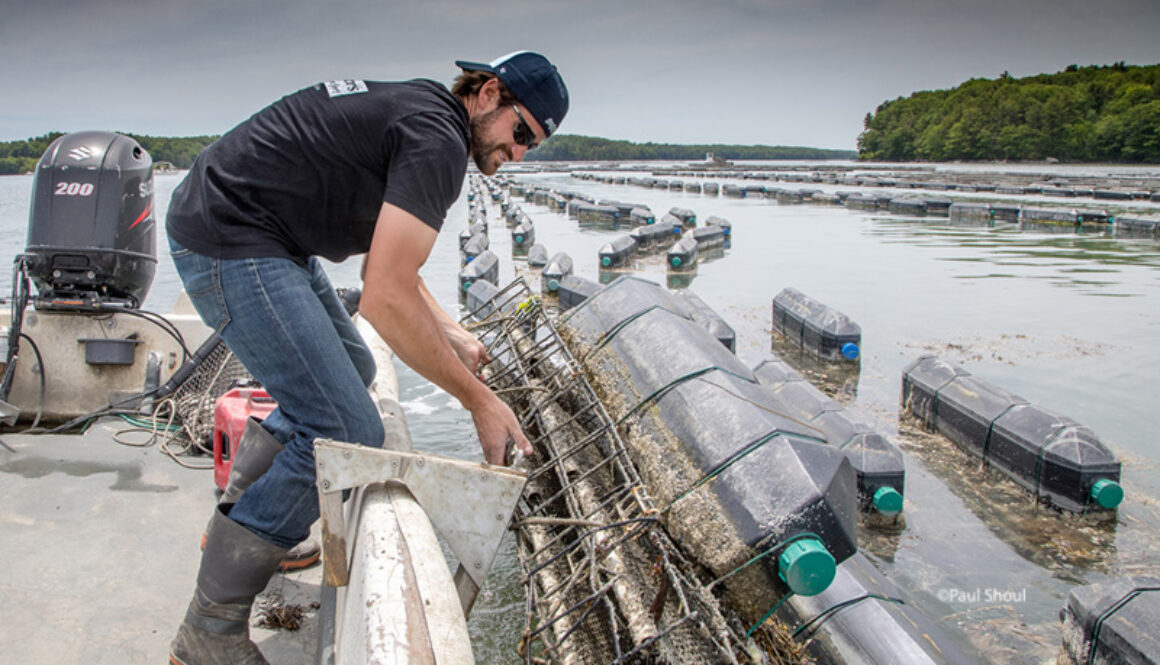 Mook Sea Farm OysterGro™ cages on the Damariscotta river